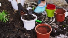 Giardinaggio La ragazza sta lavorando nel giardino dell'ortensia dei cespugli Fiori delle acque del giardiniere della donna con l video d archivio
