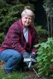 Giardinaggio maggiore della donna Fotografia Stock Libera da Diritti