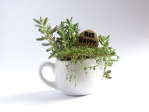 Giardinaggio miniatura Immagine Stock