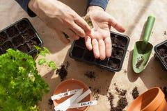 Giardinaggio, piantando a casa semi della semina dell'uomo in scatola di germinazione fotografie stock