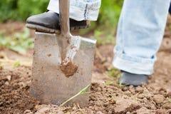 Giardinaggio - scavando sopra il terreno Fotografie Stock Libere da Diritti