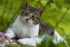Giardinaggio: Una vita del ` s del gatto Fotografia Stock Libera da Diritti
