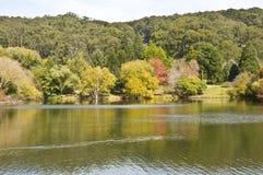 Giardini botanici alti del supporto, Australia Meridionale Immagini Stock