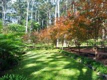Giardini botanici della montagna di Tamborine Immagine Stock