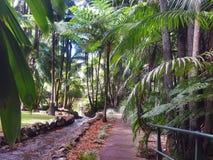 Giardini botanici della montagna di Tamborine Fotografie Stock Libere da Diritti