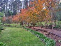Giardini botanici della montagna di Tamborine Fotografia Stock