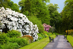 Giardini botanici di Belfast Fotografie Stock
