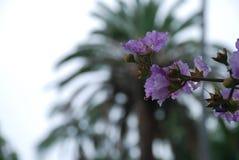Giardini botanici di Brisbane Fotografia Stock Libera da Diritti