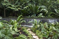 Giardini botanici di Singapore immagine stock libera da diritti