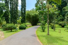 Giardini botanici reali. Tipi differenti di alberi Fotografie Stock