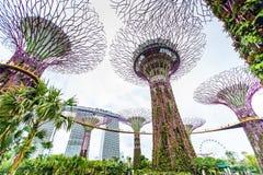 Giardini dalla baia - giardino del ` s di Singapore di Wonder immagini stock
