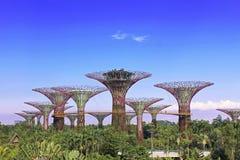 Giardini dalla baia, Singapore Immagini Stock