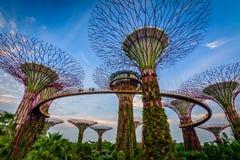 Giardini dalla baia Singapore Fotografie Stock Libere da Diritti