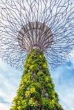 Giardini dalla baia Singapore Immagini Stock