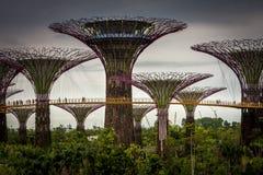 Giardini dalla baia Singapore Fotografia Stock
