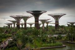 Giardini dalla baia Singapore Immagine Stock