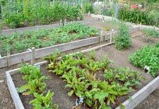Giardini di assegnazione Immagine Stock Libera da Diritti