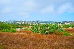 Giardini di Buskett, Siggiewi, Malta fotografia stock libera da diritti
