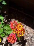 Giardini di fiori immagine stock