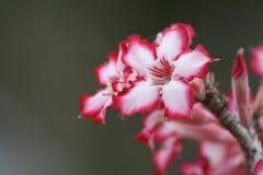 Giardini di fiori della natura Fotografia Stock Libera da Diritti