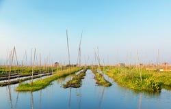 Giardini di galleggiamento nel lago Inle, Myanmar Immagine Stock Libera da Diritti