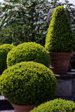 Giardini di Italiante Fotografia Stock Libera da Diritti