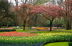 Giardini di Keukenhof Fotografie Stock