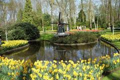 Giardini di Keukenhof Foto di macro dei tulipani immagine stock