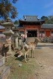 Giardini di Nara Fotografia Stock