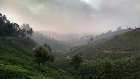 Giardini di tè di Munnar Immagini Stock