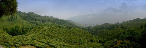Giardini di tè famosi al Sikkim Immagine Stock