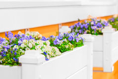 Giardini floreali bianchi con i bei fiori Fotografie Stock