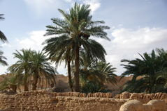 Giardini in Ghadames, Libia Fotografie Stock Libere da Diritti