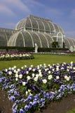 Giardini Londra Regno Unito del kew della casa di palma immagine stock libera da diritti