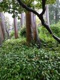 Giardini after rain. Trees in Giardini, Venice Royalty Free Stock Photography