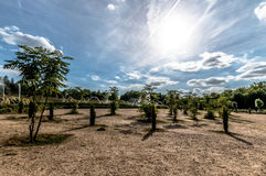 Giardini a Versailles Fotografia Stock Libera da Diritti