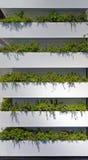 Giardini verticali Fotografia Stock Libera da Diritti