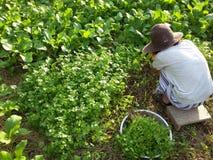 giardiniere fotografia stock