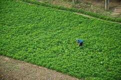giardiniere Fotografia Stock Libera da Diritti
