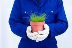 Giardiniere in camici blu che tengono erba verde conservata in vaso Fotografia Stock