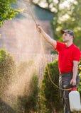 Giardiniere che applica un fertilizzante dell'insetticida ai suoi arbusti della frutta Immagine Stock Libera da Diritti
