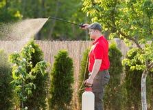 Giardiniere che applica un fertilizzante dell'insetticida ai suoi arbusti della frutta fotografia stock libera da diritti