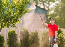 Giardiniere che applica un fertilizzante dell'insetticida ai suoi arbusti della frutta Immagini Stock Libere da Diritti