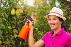 Giardiniere che applica un fertilizzante di insecticide/a al suo arbusto della frutta Fotografia Stock Libera da Diritti