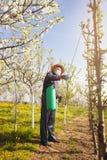Giardiniere che applica un fertilizzante di insecticide/a alla sua frutta Fotografie Stock