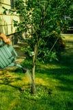 Giardiniere che innaffia un albero fotografie stock libere da diritti