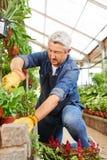 Giardiniere che lavora in una serra Fotografia Stock