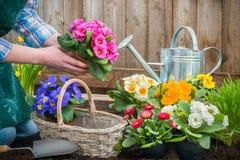 Giardiniere che pianta i fiori immagine stock