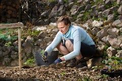 Giardiniere che pianta le piantine nei letti di recente arati del giardino fotografia stock libera da diritti