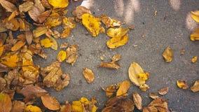 Giardiniere che rastrella il metraggio autunnale caduto dell'impedimento delle foglie UHD 4K video d archivio